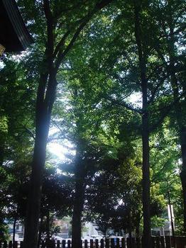 ai_20100516_03.JPG