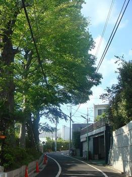 ai_20100516_05.JPG